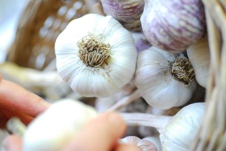 park hill garlic